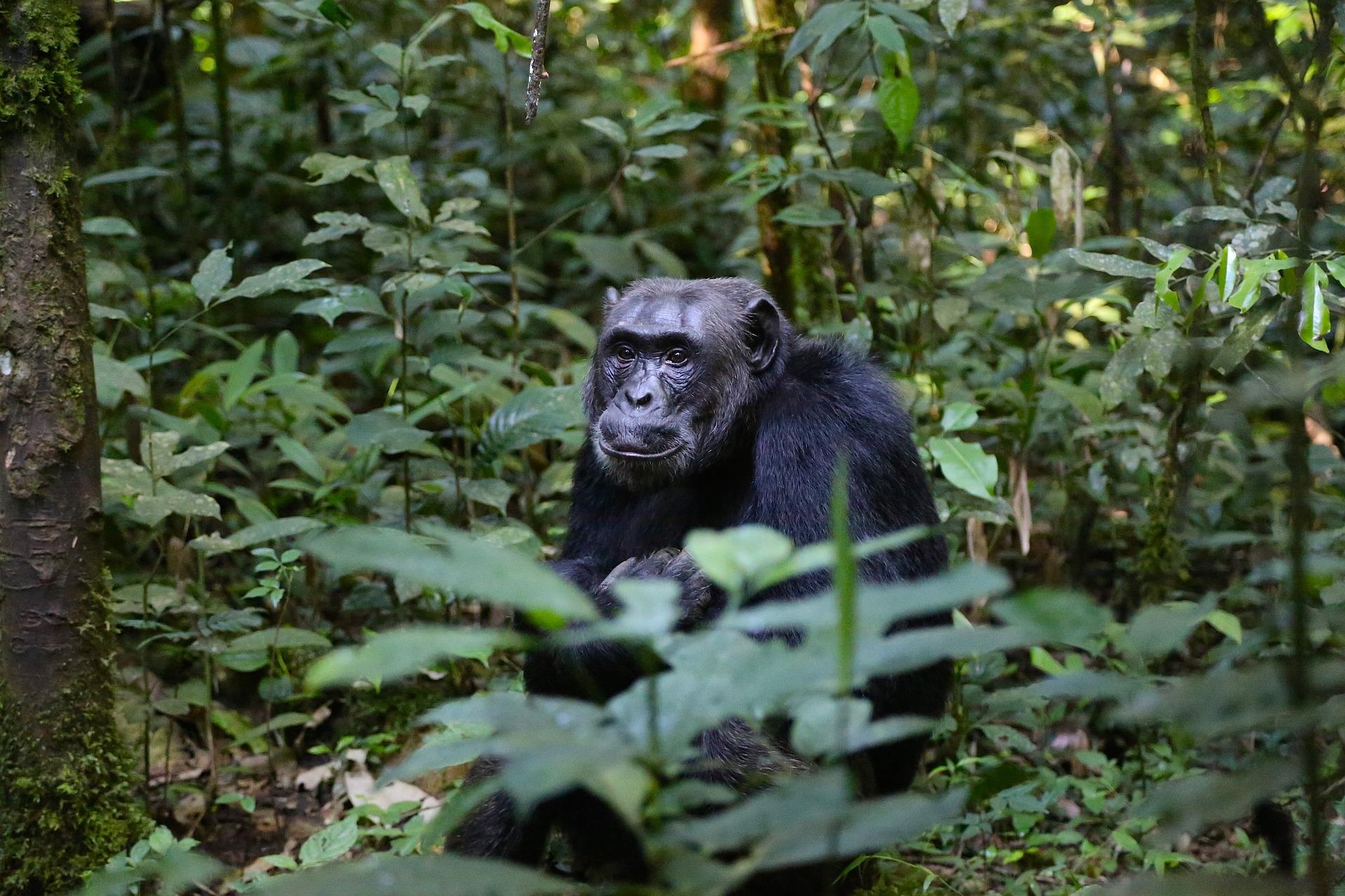 Rundreise Uganda: Empfehlungen & Vergleich (09/20)