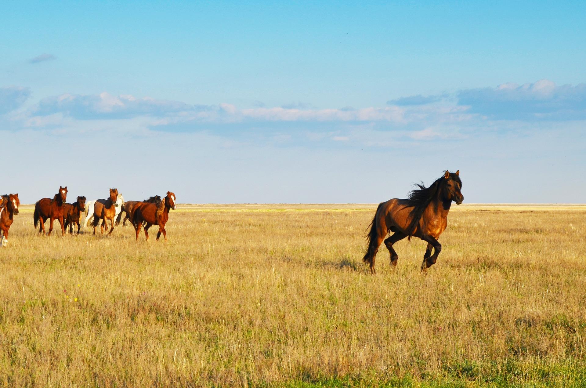 Rundreise Kasachstan: Empfehlungen & Vergleich (12/20)