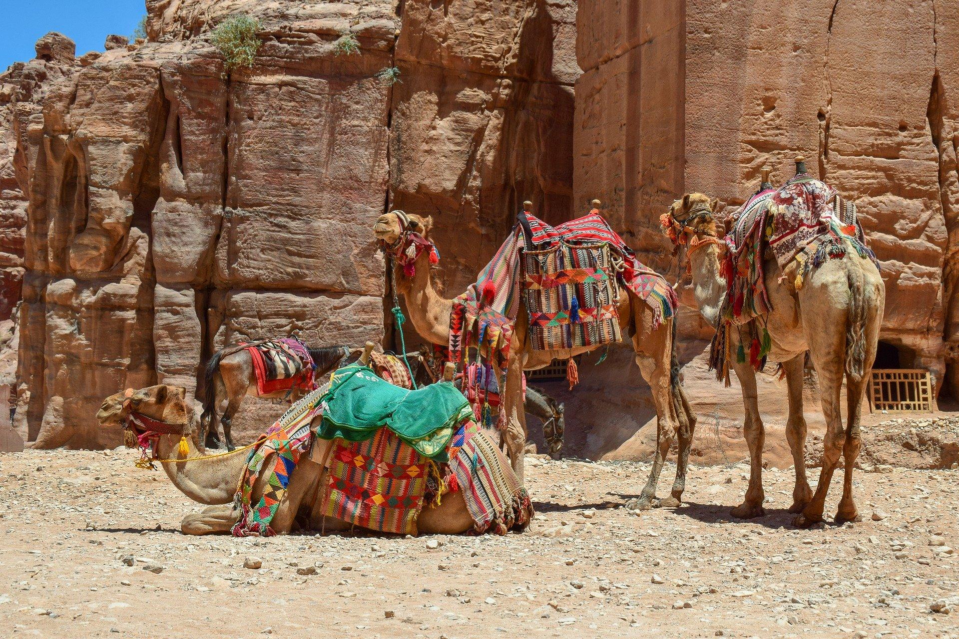 Rundreise Jordanien: Empfehlungen & Vergleich (01/21)