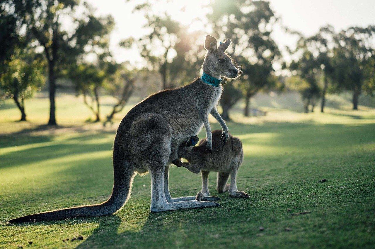 Rundreise Westaustralien: Empfehlungen & Vergleich (02/21)
