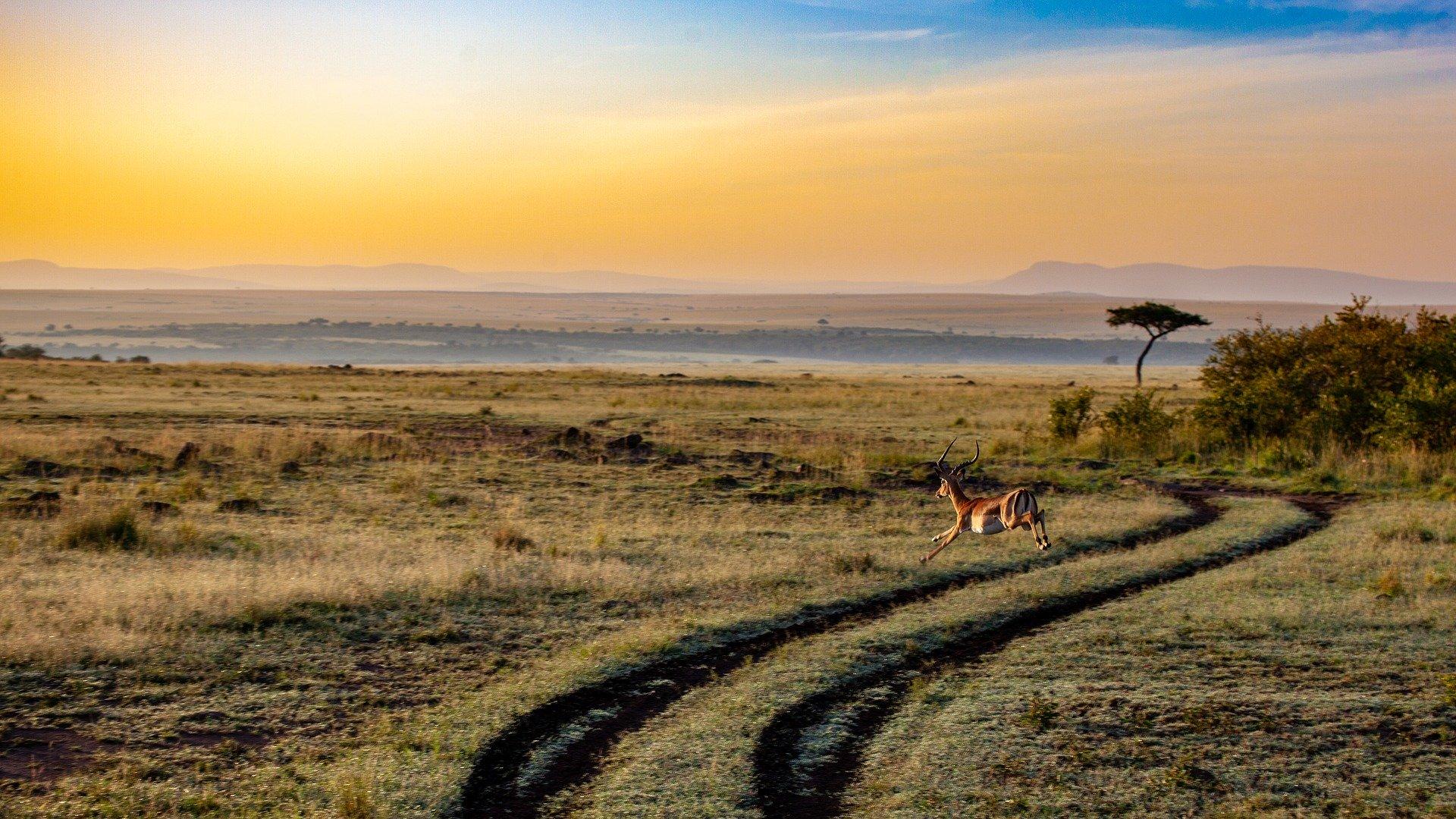 Rundreise Afrika: Empfehlungen & Vergleich (09/20)