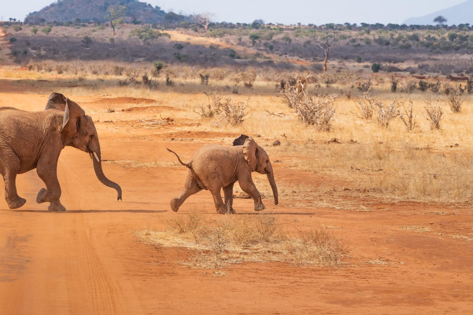 Rundreise Kenia: Empfehlungen & Vergleich (04/21)