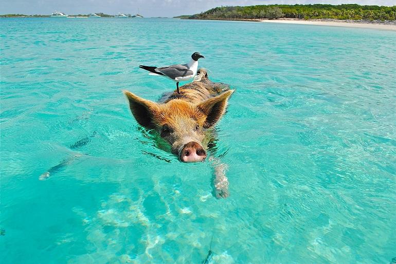 Rundreise Bahamas: Empfehlungen & Vergleich (01/21)