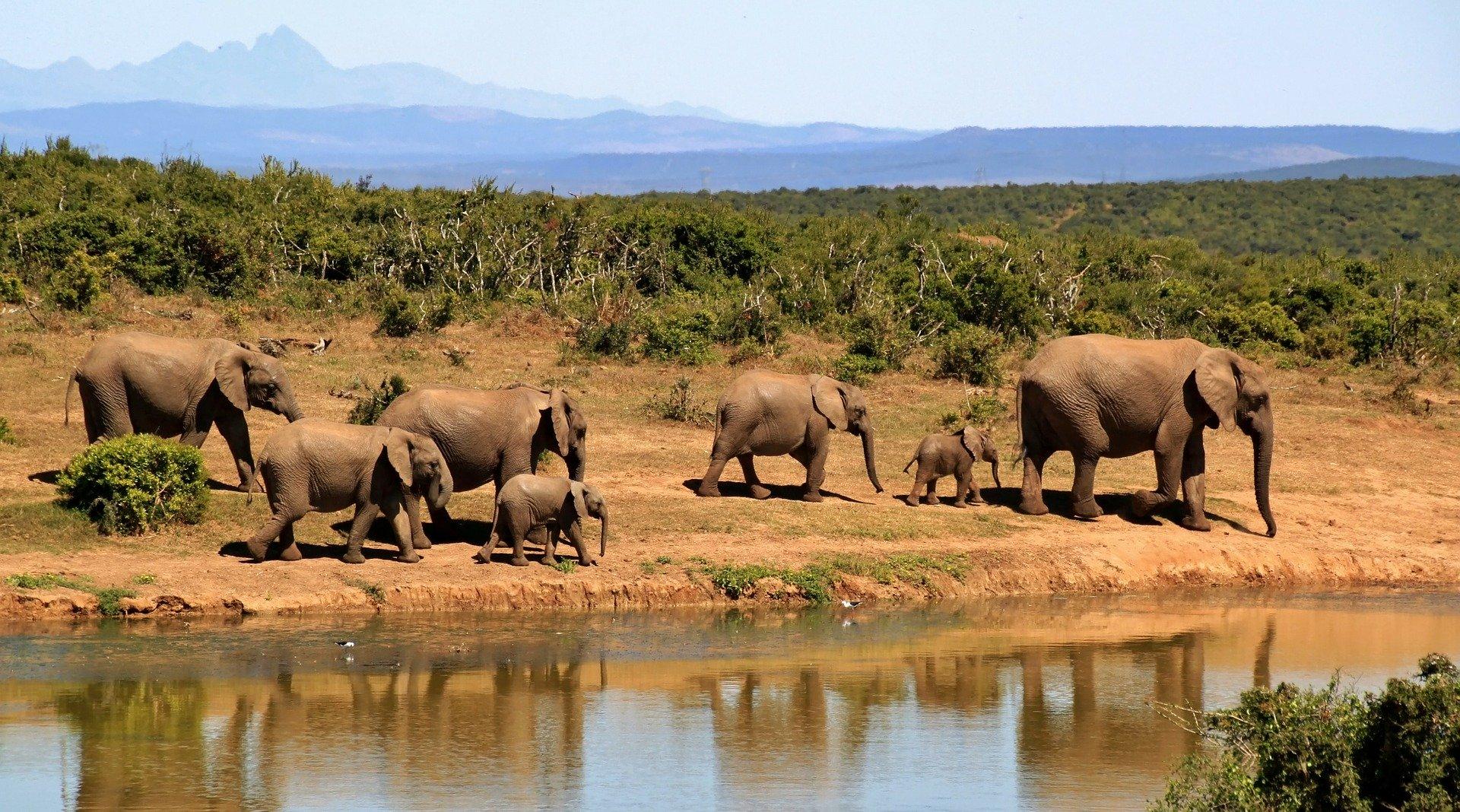 Rundreise Südafrika: Empfehlungen & Vergleich (09/20)
