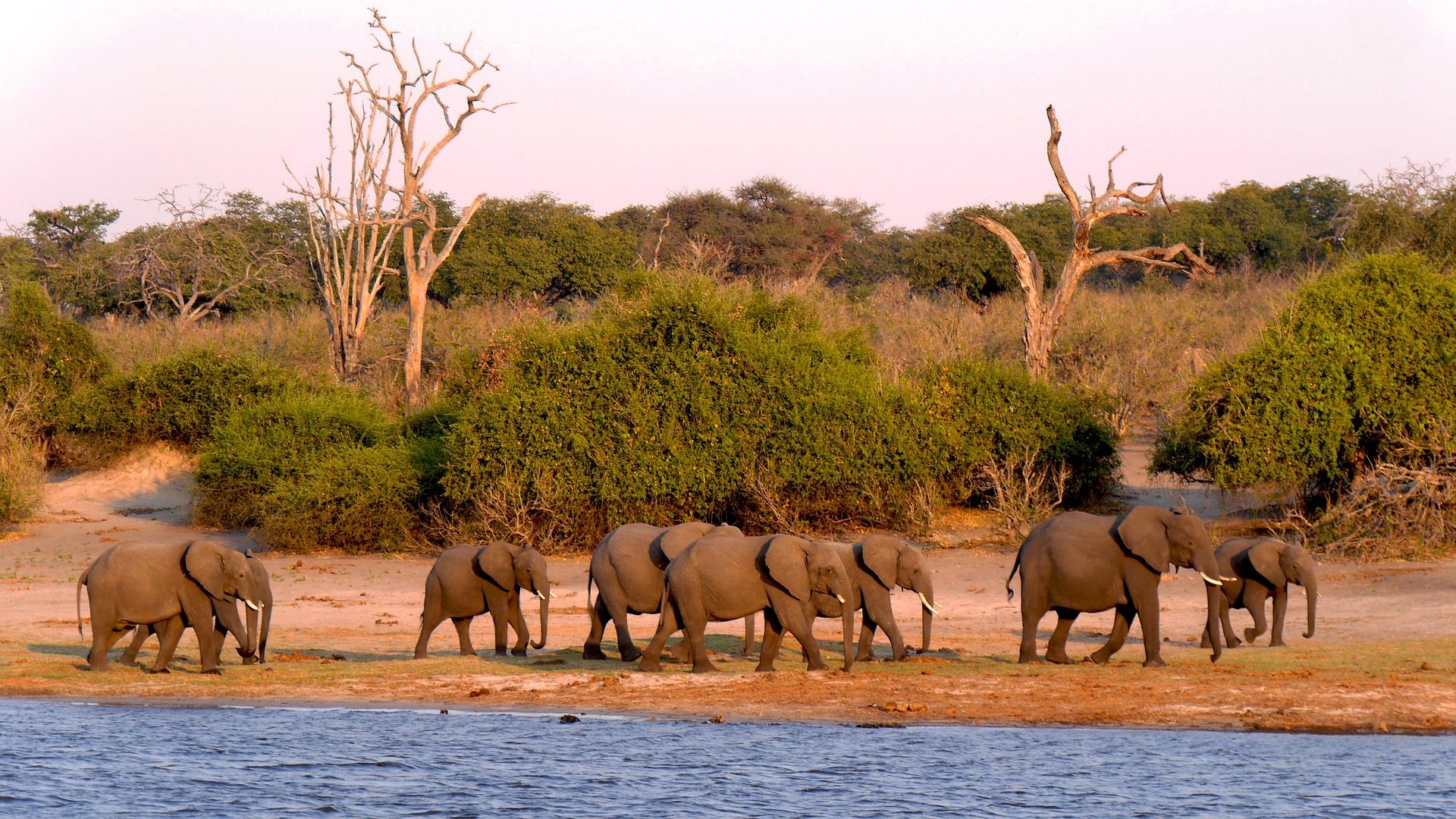 Rundreise Botswana: Empfehlungen & Vergleich (09/20)